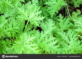 Bovenaanzicht Close Groene Blad Achtergrond Behang Stockfoto