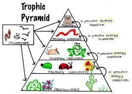 animal food pyramid. Unique Food TrpohicPyramidinPermacultureDesign1 And Animal Food Pyramid