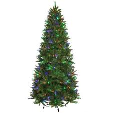 Christmas Tree Buying Guide How To Select U0026 Care For Your Live What Kind Of Christmas Trees Are There