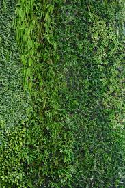 stock photo vertical garden natural green leaf texture
