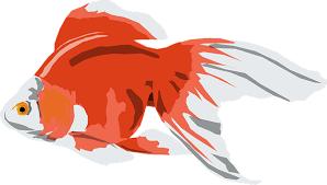 Logo Ikan Mas