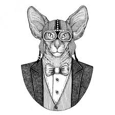 Fotka Orientální Kočka S Velkýma Ušima Rukou Nakreslené Ilustrace