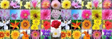 Resultado de imagen de Flores de Bach