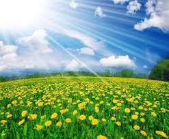 Kết quả hình ảnh cho hình ảnh mùa xuân
