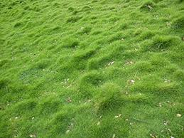 Grass Painting Hgtvcom Syed Carpet Grass Seed 1000 Seed Pack Amazonin Garden Outdoors