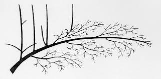 Plums PruningRHS GardeningPrune Fruit Tree