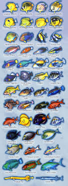 Maui Reef Fish Identification