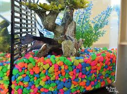 petsmart animals fish. Simple Petsmart Buy A Pet Fish For Petsmart Animals
