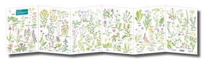 Fold Out Id Chart Grassland Plants 2