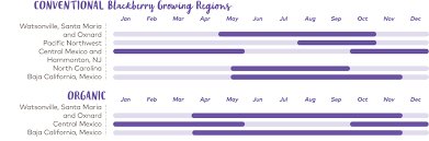 Blackberry Ripening Chart Berries Faqs Driscolls