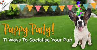 diy dog agility equipment plans unique puppy party ideas tips for socialisation parties that