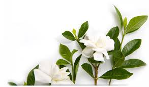 flowers d88f2d2867b54b3bab10eaec b