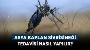 Asya Kaplan Sivrisineği nedir? Asya Kaplan Sivrisineği tedavisi nasıl  yapılır? - Haberler - Diriliş Postası