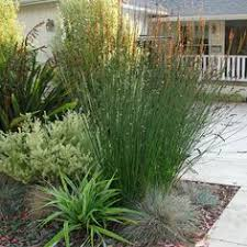 Small Picture Side Yard Design Pictures Remodel Decor and Ideas Backyard