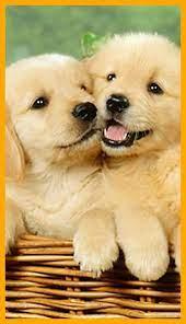 4K Puppy Wallpaper