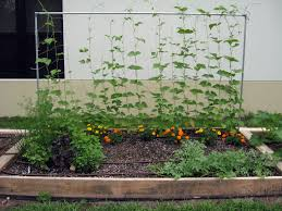 Plants For Kitchen Garden How To Build A Raised Vegetable Garden Garden Design Garden