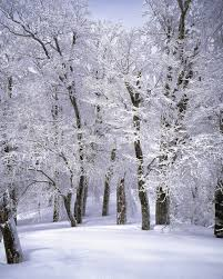Image result for winter pictures