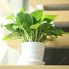 Outdoor Winter Plants Winter Gardens Moving Indoor Plants Outside Climbing Plants Indoor