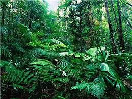 amazon rainforest. Exellent Rainforest AMAZON RAINFOREST GLOSSY POSTER PICTURE PHOTO Rain Forest Jungle Leaf Green Intended Amazon Rainforest O