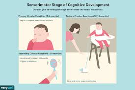 Child Cognitive Development Stages Chart The Sensorimotor Stage Of Cognitive Development