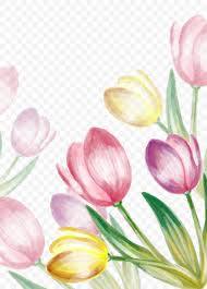 Cut Flower Chart Water Painted Tulip Vector Png 1121x1559px Tulip Blossom