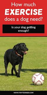 Dog Breed Exercise Chart How Much Exercise Does Your Dog Need Dog Care And Health