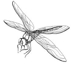 Small Picture Dragonfly Coloring Pages chuckbuttcom