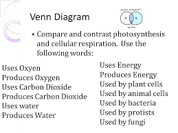 Venn Diagram Photosynthesis And Cellular Respiration Comparing Photosynthesis Plants And Animals Venn Diagram Of Protists