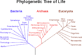 Bacteria Classification Classification Of Bacteria Seeks To Describe The Diversity