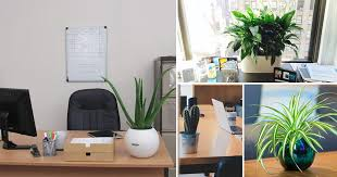 Small plant for office desk Work Desk 15 Best Office Desk Plants That Dont Need Space Balcony Garden Web 15 Best Office Desk Plants That Dont Need Space Balcony Garden Web