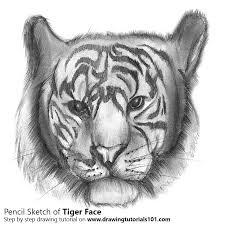 tiger face drawing pencil. Unique Face Tiger Face Pencil Drawing  How To Sketch Using Pencils   DrawingTutorials101com Inside R