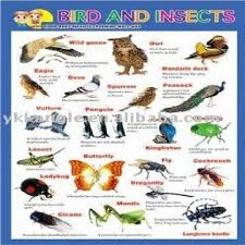 3d Wall Chart Bird And Insects Global Sources
