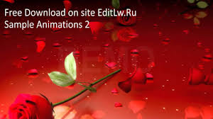 red rose animation video background hd fooe free without registering you