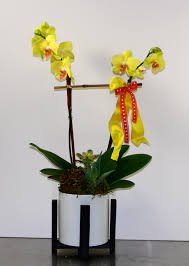 double stem yellow orchids