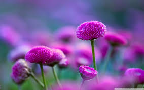 1920x1080 nature plant flowers colorful beautiful flower free animated wallpapers for mobile detail