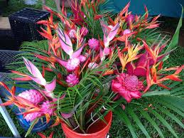 tropical flowers kauai