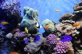 real underwater world. Beautiful World For Real Underwater World E