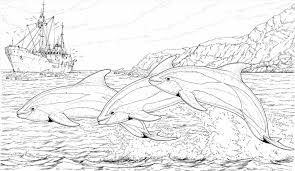 Small Picture Coloring Page Dolphin Coloring Page For Kids Animal Pages Big