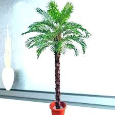 artificial palm trees indoor Artificial Palm Trees Indoor