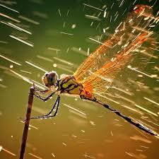 Dragonfly in rain iPad Air Wallpapers ...