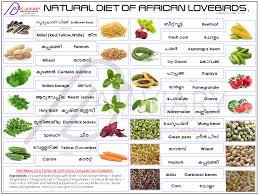 Cockatiel Diet Chart Natural Diet Of African Lovebirds African Lovebirds Love