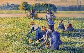 la cueillette des pois picking peas by camille arro