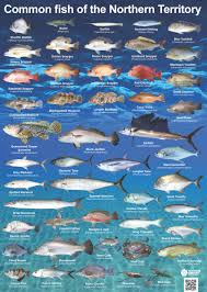 Australian Reef Fish Species Chart Common Nt Fish Nt Gov Au
