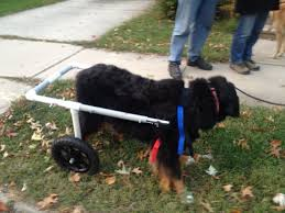 diy dog wheelchairs diy cat