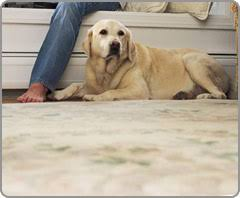 Small Picture 53 Dog Digging Carpet Nice Yard Despite Your Dog039s Best
