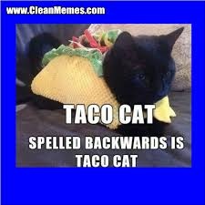 Taco Cat   Clean Memes – The Best The Most Online via Relatably.com