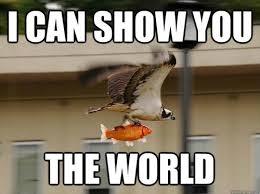 Funny Animal Memes - Daily Paws Daily Paws via Relatably.com