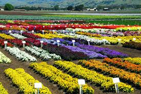 flower farm stock photo image of country farm agriculture 4990564