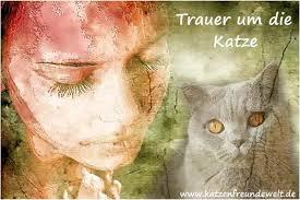 Trauer Um Katze Wie Geht Man Damit Um Die Katzenfreundewelt