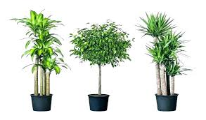 luxury the best indoor plants for low light a good plant air quality awesome in